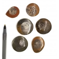 Ammonite Fossil Buttons from Morocco